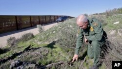 FILE - Border Patrol agent Richard Gordon examines broken, dried branches that indicate human traffic near the border fence where illegal immigrants enter the United States, Boulevard, California, March 25, 2013.
