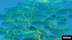 Cerre photographie montre le Papahānaumokuākea National Monument prise par Claire Fackler, NOAA National Marine Sanctuaries.