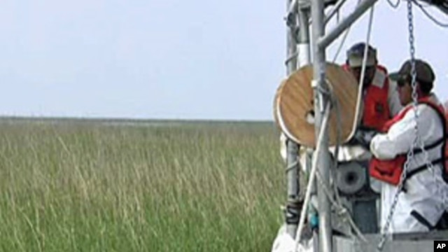 Oil clean-up in a Louisiana marsh