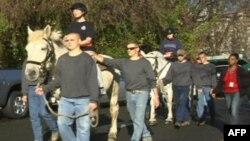 美国陆军老卫队葬礼排的骏马为受伤的军人治疗伤痛