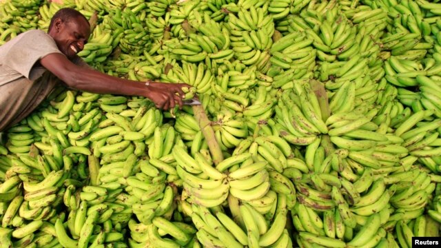 A vendor displays bananas at his stall in the Somali capital Mogadishu, July 8, 2013.