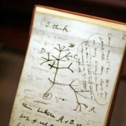 A copy of Charles Darwin's notebook containing his idea of an evolutionary tree. The notebook is in the American Museum of Natural History in New York City.