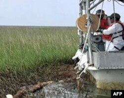 美国路州沼泽地清理墨西哥湾漏油污染