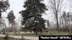 سخنگوی وزارت زراعت و مالداری: غصب زمین درشهرها به گونه خاص در کابل و در کمربندی های سبز چالش عمده سرسبزی و ایجاد فضای سبز است.