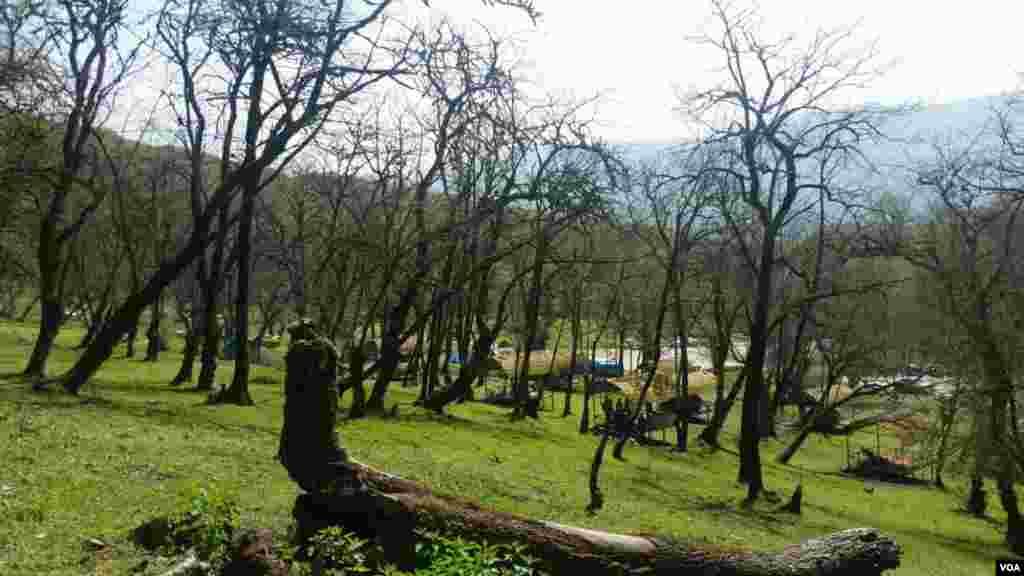 پارک جنگلی جوارم، استان مازندران عکس: آزاد آذرخش