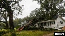 Külək nəticəsində ağaçlar bir çox evi yarasız hala salıb.