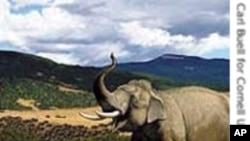 جنگلی جانوروں سے بچاؤ کی انوکھی تراکیب