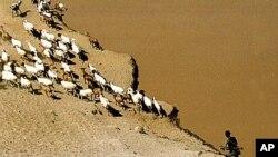 奧莫河位於埃塞俄比亞南方﹐該處一名畜牧業者荷槍保護牲口(資料圖片)