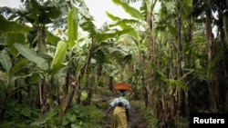 Congolese woman carries her baby as she walks through a banana plantation near the town of Rangira, DRC, May 23, 2012.