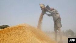 Laos'ta Gıda Krizi