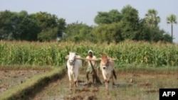 Vùng thôn quê Ấn Độ
