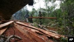 Para petugas menyita kayu yang diperoleh dari pembalakan liar di pegunungan Seulawah, Aceh. (Foto: Dok)