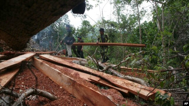 FILE - Rangers confiscate woods after a raid at an illegal logging site at Seulawah mountains in Aceh province, Indonesia, May 14, 2009.