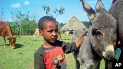 Donkeys play a major role in many aspects of rural Ethiopian life