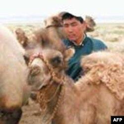 Những người sắc tộc Mông Cổ chiếm chưa tới 20% dân số Khu Tự trị Nội Mông