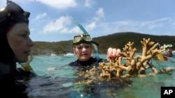FILE - Australian senator Pauline Hanson listens to marine scientist Alison Jones (L) as she displays a piece of coral on the Great Barrier Reef off Great Keppel Island, Queensland, Australia.