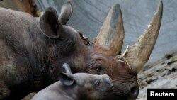 Sừng tê giác là mặt hàng được tìm mua ở nhiều nơi thuộc vùng Đông Á vì được cho là có đặc tính chữa bệnh