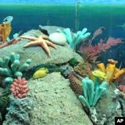 سمندری حیات
