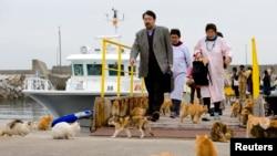 فیری کا استقبال درجنوں بلیاں کرتی ہیں۔