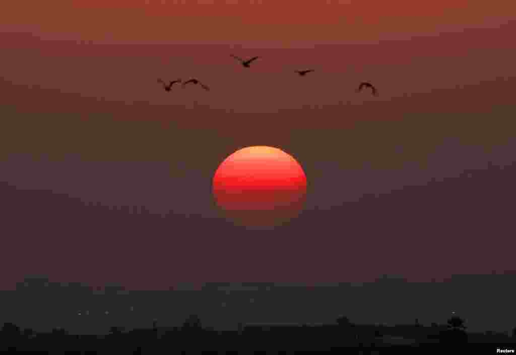 Birds fly as the sun sets over the northern Gaza Strip November 20