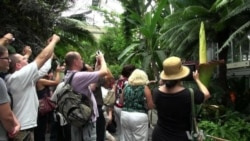 Tall, Stinky Plant is a Draw At US Botanic Garden
