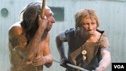 FILE - A museum recreation shows Neanderthals in this undated photo.
