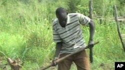 Henry Ladu plants crops on land he farms south of Juba in southern Sudan.