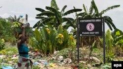 Shell a contaminé cette zone près du delta du Niger, le 9 mars 2016.