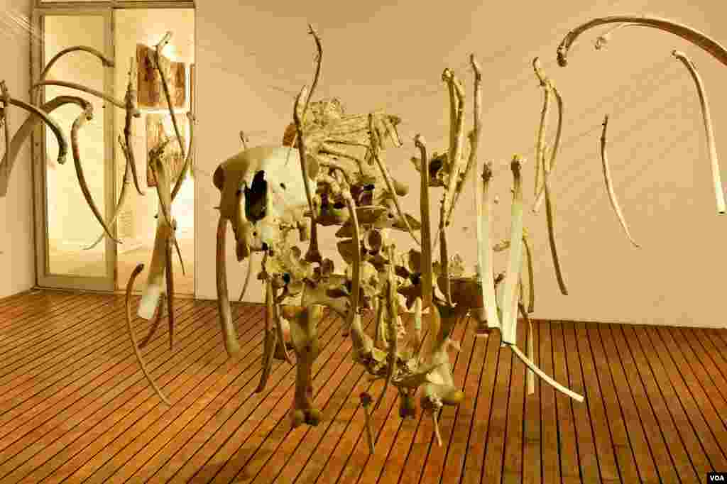 Bronwyn Lace's suspended horse skeleton in a gallery in Johannesburg (Photo: B. Lace)