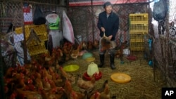 A worker catches a live chicken at a poultry market in Shanghai, China on April 5, 2013.