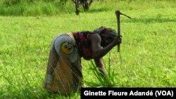 Une femme dans un champ au Bénin, le 26 avril 2017. (VOA/Ginette Fleure Adandé)