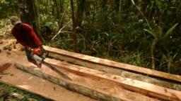 Seorang penebang liar menebang pohon di hutan selatan Sampit, Kalimantan Tengah. (Foto: REUTERS/Yusuf Ahmad)