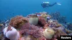 南中國海珊瑚礁