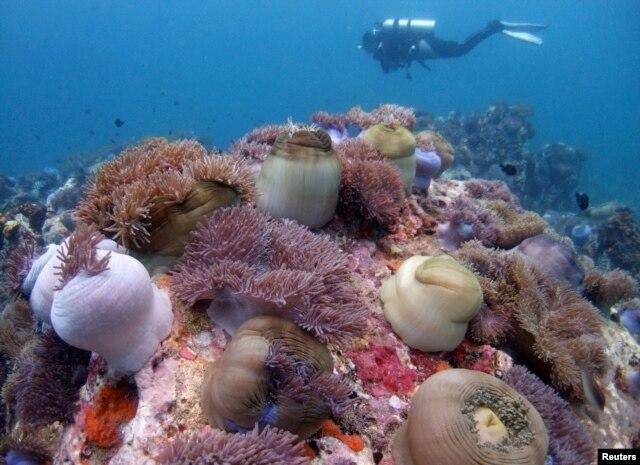 Trong khoảng thời gian từ năm 2012 đến năm 2015, ngư dân Trung Quốc đã dùng những cánh quạt lớn gắn vào tàu đa dụng để chặt san hô và chuẩn bị cho việc xây đảo nhân tạo ở quần đảo Trường Sa.