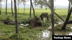 지난 29일 북한 평양시 순안 지구에서 15호 태풍 볼라벤으로 쓰러진 나무들을 치우는 주민들.