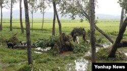 지난달 29일 북한 평양시 순안 지구에서 15호 태풍 볼라벤으로 쓰러진 나무들을 치우는 주민들.