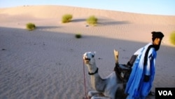 Moussa el Mouctar, an ethnic Tuareg from Timbuktu, with one of his camels, on the outskirts of Timbuktu, Mali, 2011-2012. (Douglas Post Park/Saharan Archaeological Research Association)