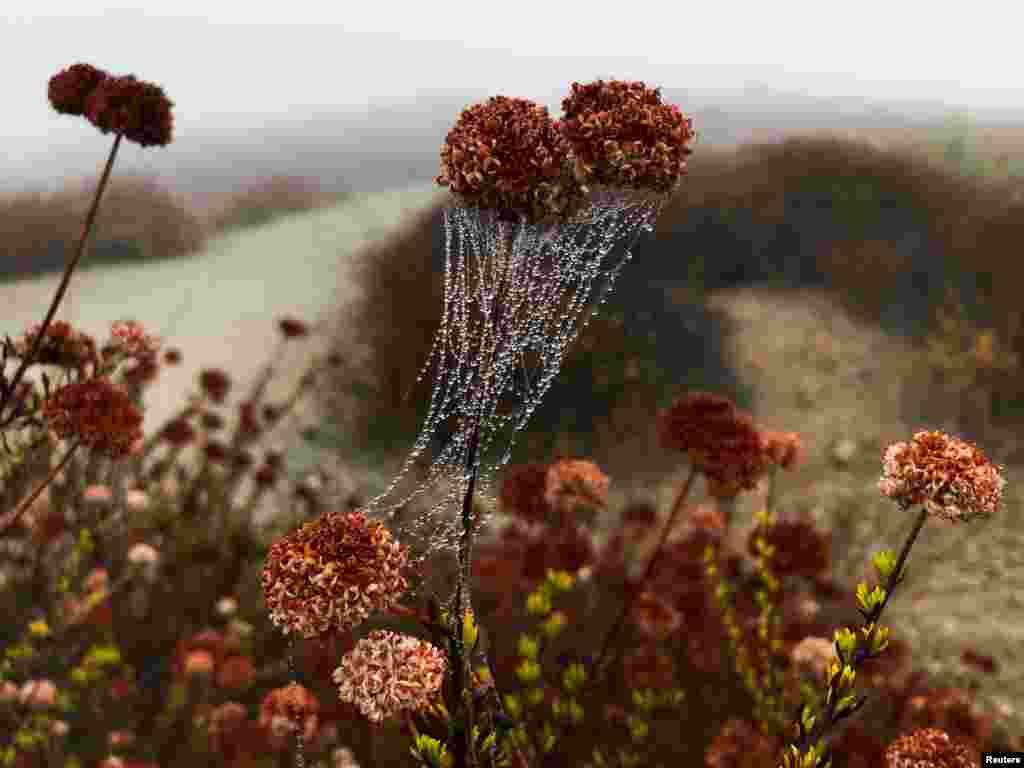 미국 캘리포니아주 로스엔젤레스에서 이른 아침 거미줄에 이슬 방울이 맺혀 있다.
