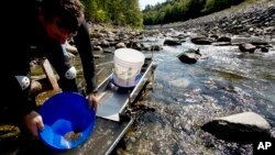 FILE - Chris Hall uses a sluice box to pan for gold in the Wild Ammonoosuc River in Bath, N.H., Sept. 4, 2016.