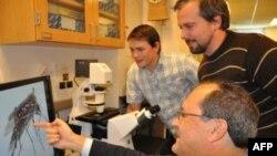 Các nhà khoa học nghiên cứu về loài muỗi mang virut sốt dengue