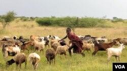 Nombre d'Ougandais continuent de s'identifier selon leur ethnie