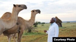 African Camel Health Study