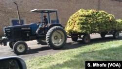 Un tracteur transporte du tabac à Beatrice, à environ 50 km au sud de Harare, au Zimbabwe, en février 2018. (S. Mhofu / VOA)