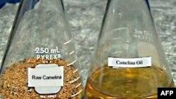 Američka mornarica testira benzin koji je pola poreklom od nafte, a pola od semena biljke zvane kamelina