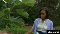第一夫人米歇尔的菜园(美国之音视频截图)