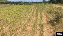 Kawasan pertanian di India selatan mengalami kekeringan akibat kemarau panjang (foto: ilustrasi).