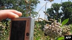 为植物和传播花粉的蜜蜂拍照