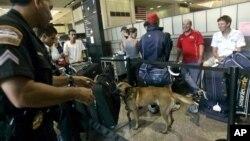 ماموران امنیتی فرودگان بین المللی لس آنجلس با کمک سگ های ردیاب و دستگاه های پیشرفته، چمدان های مسافران را کنترل می کنند