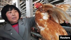 A farmer holds a chicken as she poses for a photograph at a hennery in Beifan village of Zouping county, Shandong province, China, April 1, 2013.