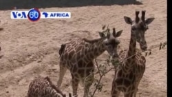 VOA60 Africa - July 24, 2013